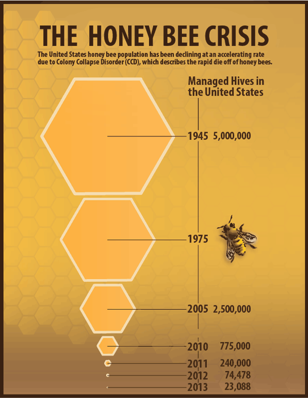 How do you raise honey bees?